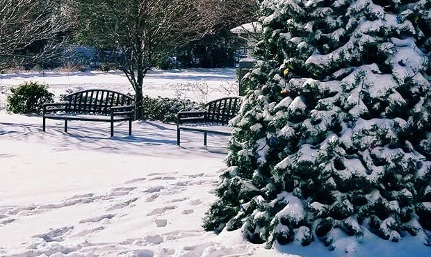 A pair of McConnell Benches with Back in the snow