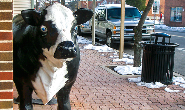 A Midtown Litter Receptacle keeping a cow company on a streetscape