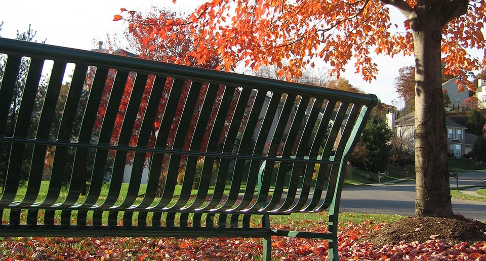 Pullman Bench in the Fall